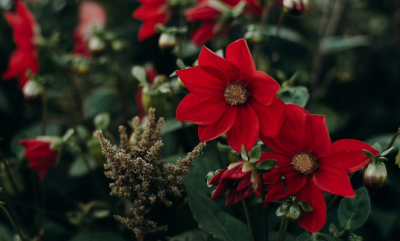 Discover the Importance of Different Flowers In Our Lives