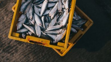 Photo of 5 Factors to Consider When Choosing An Online Fresh Seafood Market