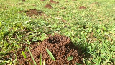 Photo of How to Choose the Best Ant Killer for Yard