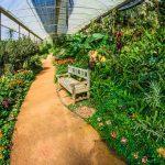 ndoor Gardening Vs. Outdoor Gardening