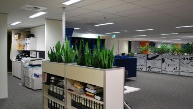 Photo of Benefits Of Indoor Office Plants Melbourne