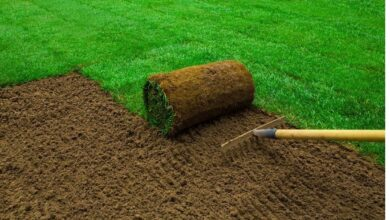 Photo of How to Care For New Turf Lawns