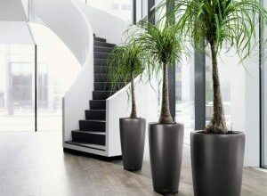 Photo of Benefits Of Having Office Plants in Your Living Space