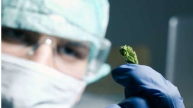 Photo of Medical Cannabis In Thailand Vastly Progressed After Legalization